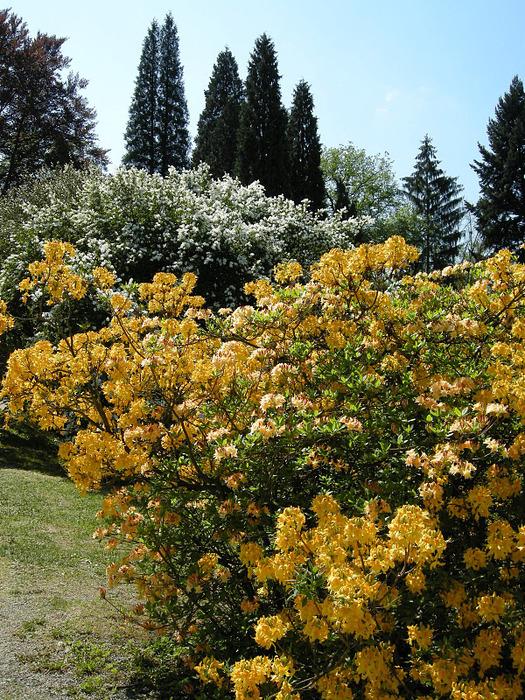Ботанический сад в Пругонице 48703