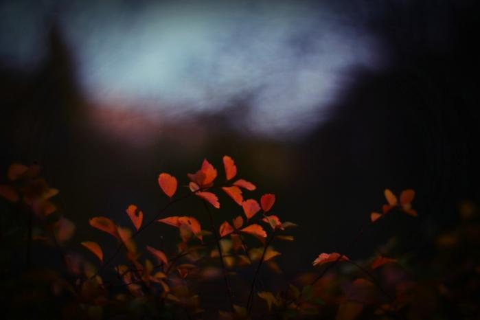 багряная осень, же