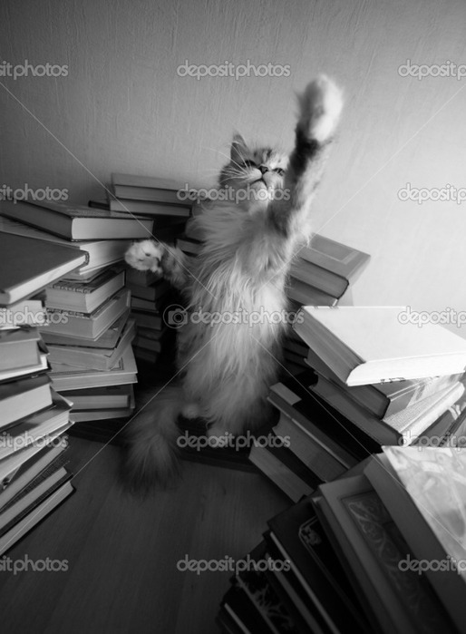 depositphotos_6184643-Playing-kitten (514x700, 74Kb)