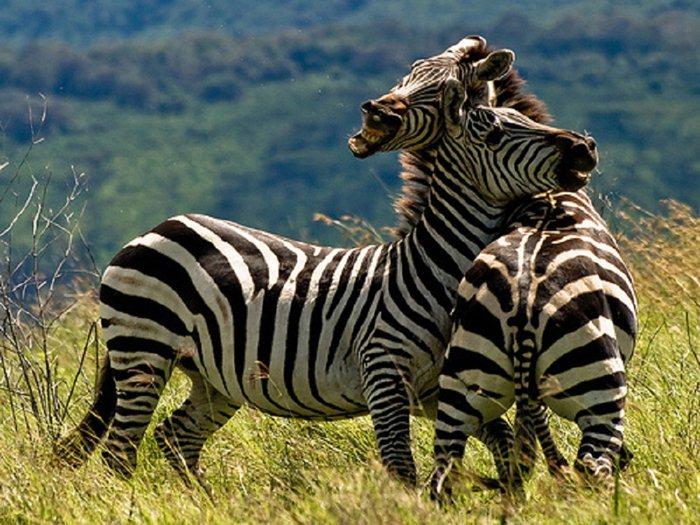 animal (16) (700x525, 103Kb)