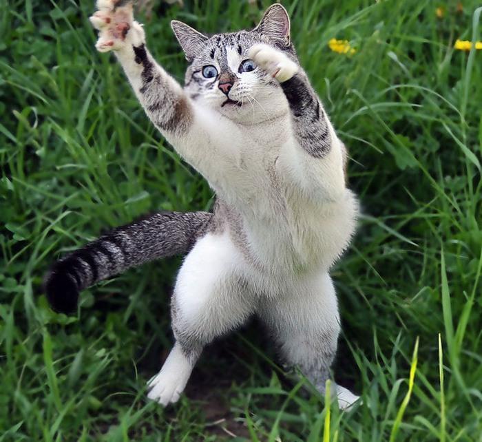 Энергичный кот