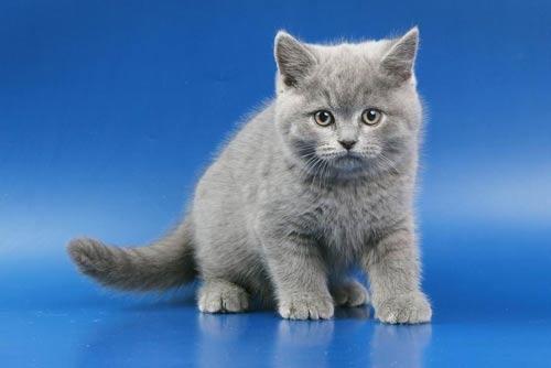 kittens_w(13m) (500x334, 16Kb)