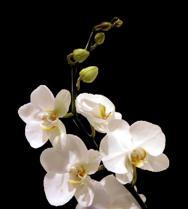 kTs_Jardin_orchidees-2-3 (630x700, 255Kb)