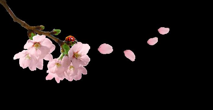 Цветы акварель пнг