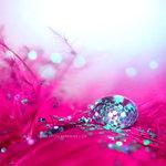 Превью __Pink___by_light_from_Emirates (600x600, 66Kb)