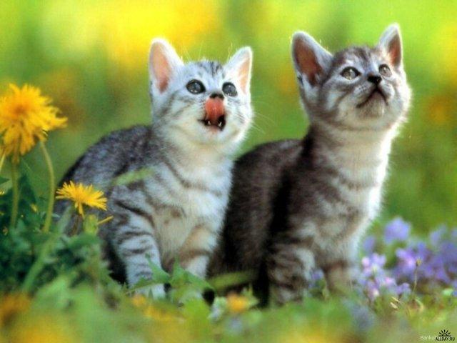У кошки увеличенный живот ликимия у