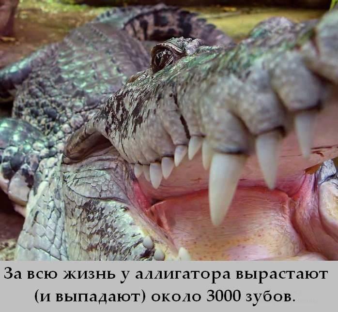 Interesnye_fakty_9 (698x645, 66Kb)