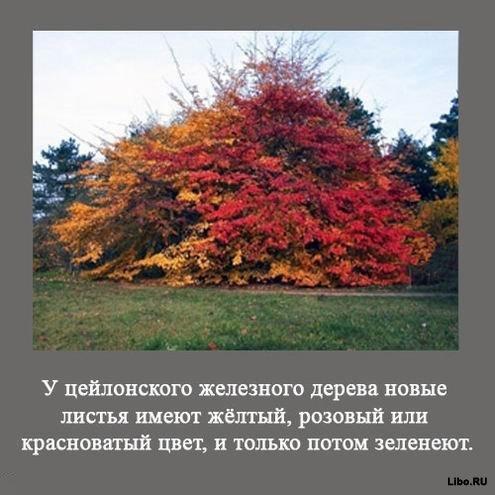 1256617635_1256591739_interesting_fact_07 (495x495, 48Kb)