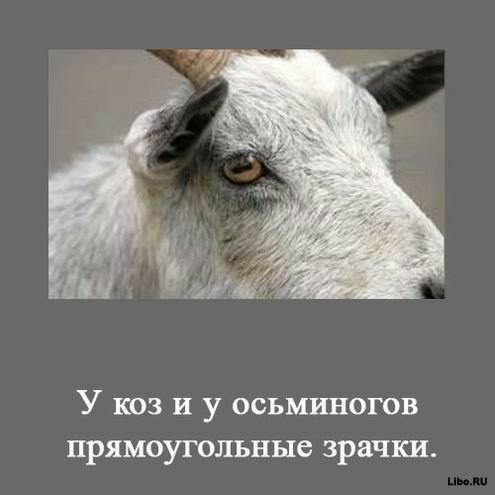 1256617640_1256591714_interesting_fact_08 (495x495, 28Kb)