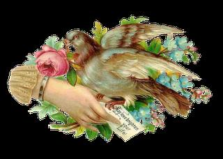 birdwhim001-1 (320x228, 105Kb)