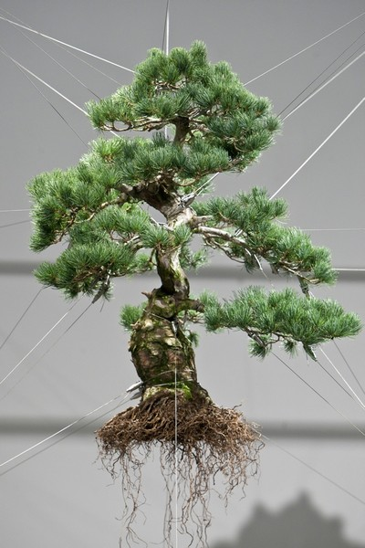 Bonsai-Tree-Sculptures-5 (400x600, 69Kb)
