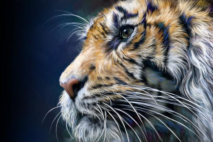 tiger5 (700x465, 100Kb)