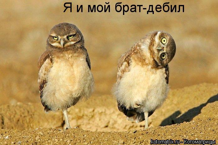 http://img0.liveinternet.ru/images/attach/c/4/80/426/80426574_large_w.jpg