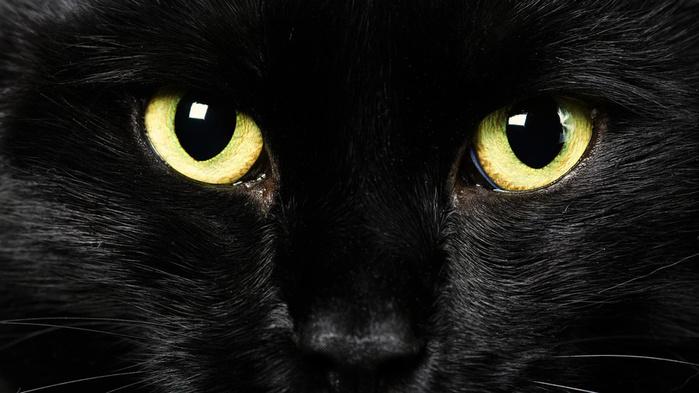 кошка черная (700x393, 103Kb)