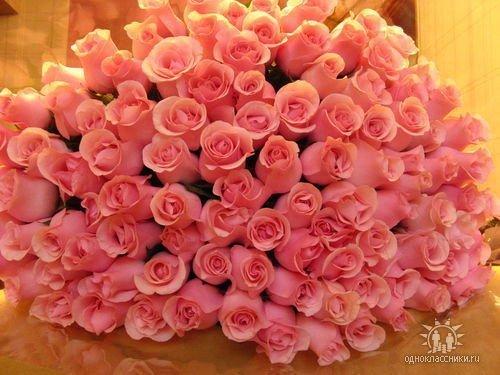 розы (500x375, 47Kb)
