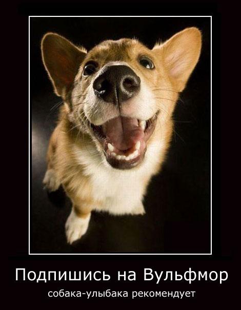 Вульфмор: самый свежий и актуальный юмор в Сети/4413077_wolfmordem20 (470x605, 43Kb)