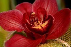 1322397601_orhideya (250x166, 14Kb)