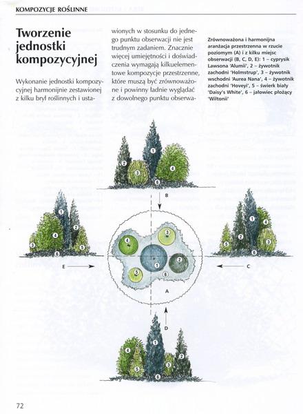план хвойников2 (440x600, 71Kb)
