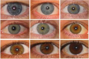цвет-глаз-300x201 (300x201, 21Kb)