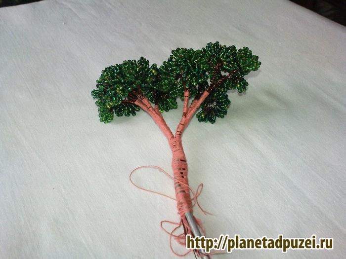 плетения дерева бонсай из
