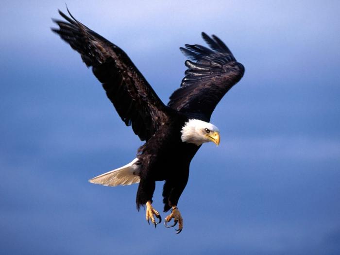 Парящий в высоте, могучий орел.