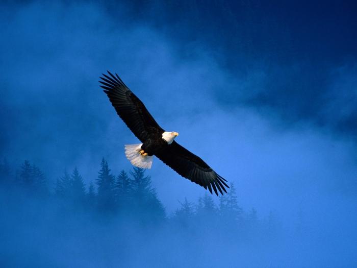 Обои Маленькая птичка и большоё орёл., орёл.