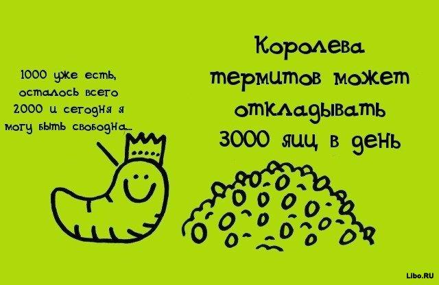 1308561675_009b53q9 (640x416, 45Kb)