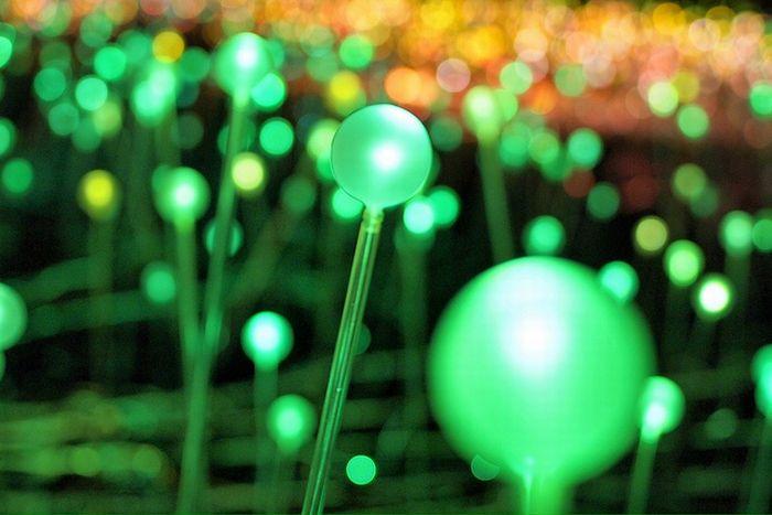 field_of_light_blooms_in_night_07 (700x467, 46Kb)