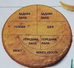 http://img0.liveinternet.ru/images/attach/c/4/80/601/80601202_large_shema_deleniya_korzha_resize2.jpg