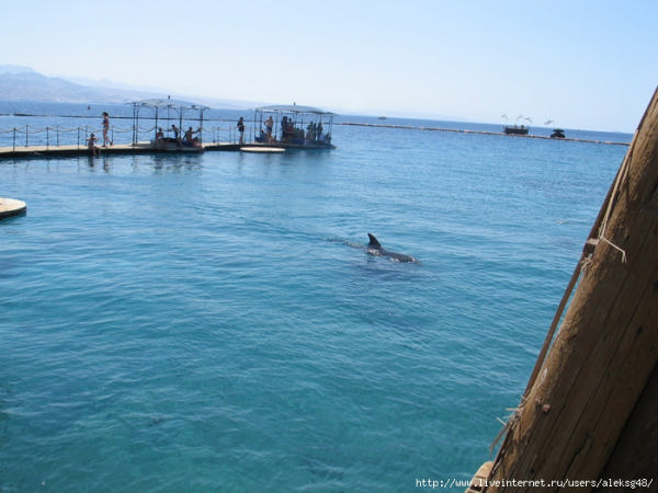 Дельфиний риф в Эйлате