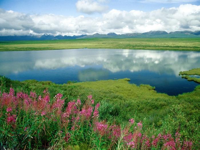 Alaska Range, Alaska (700x525, 326Kb)
