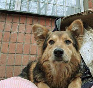 Собака бездомная (300x286, 49Kb)