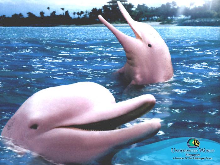 дельфин (700x525, 168Kb)