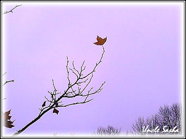 foto-0001.11.11.2.a (640x480, 38Kb)
