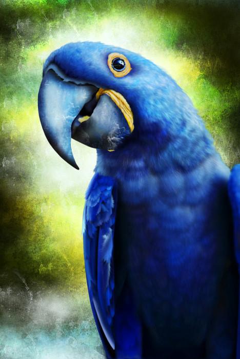 blueparrot (468x700, 104Kb)