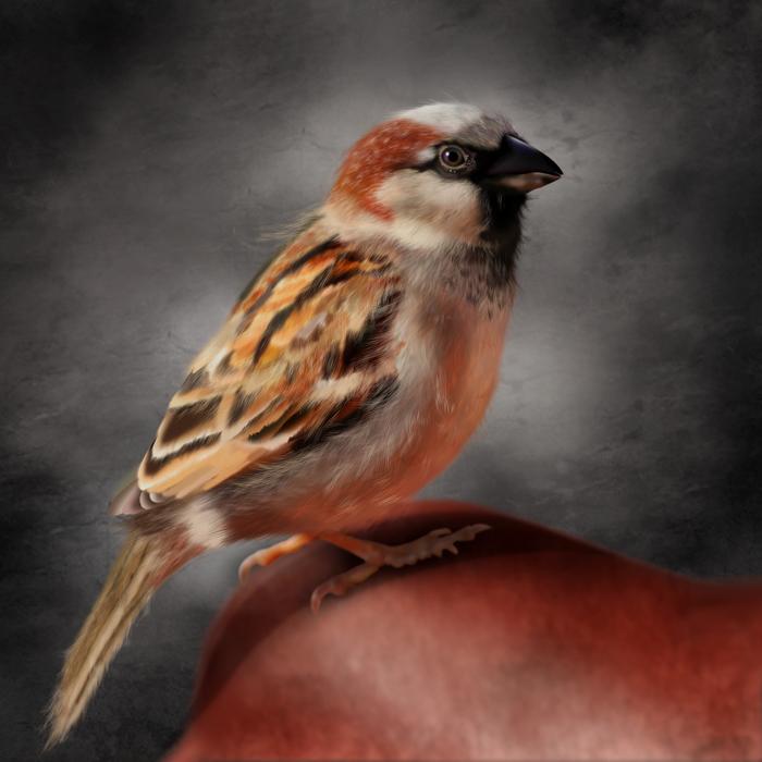 sparrow (700x700, 289Kb)
