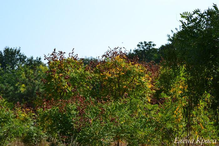 сентябрь - деревья/4348076_sentfotka042pm (700x466, 186Kb)