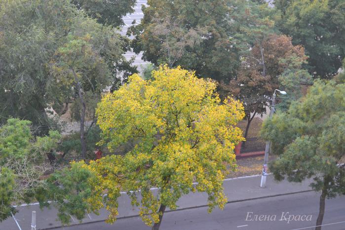 одинокое желтое дерево/4348076_DSC_00096pm (700x466, 185Kb)