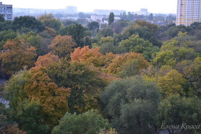 осенние деревья в Одессе/4348076_oktyabr254pm (700x466, 163Kb)