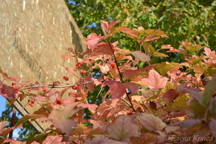 осенние листья/4348076_2011oktyabr221pm (700x466, 238Kb)