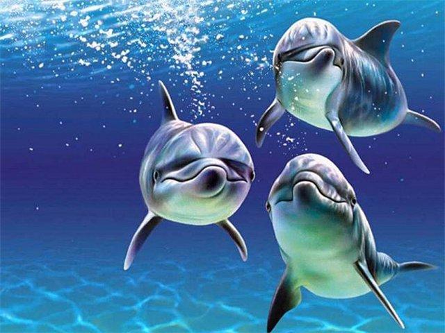 Сегодня дельфины это символ