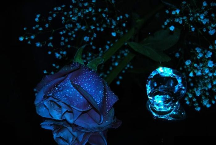 blue_rose_24 (700x470, 41Kb)