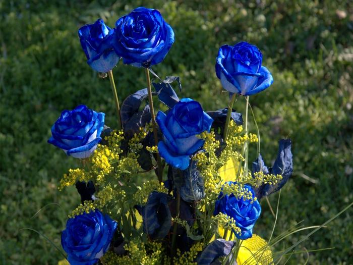 4485033_7_Blue_Roses_7378 (700x525, 315Kb)
