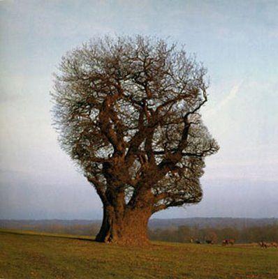 дерево2 (398x400, 28Kb)