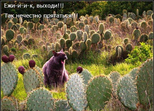 http://img0.liveinternet.ru/images/attach/c/4/80/749/80749796_large_edaf3e4e7f30.jpg