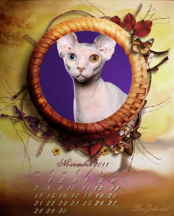 кошка на фото (564x700, 82Kb)