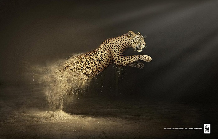 3925073_wwf_leopardadprint (700x448, 80Kb)
