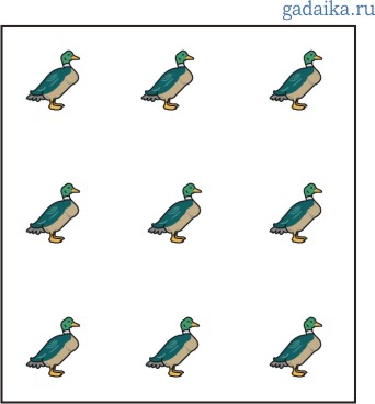 duck1 (342x368, 19Kb)