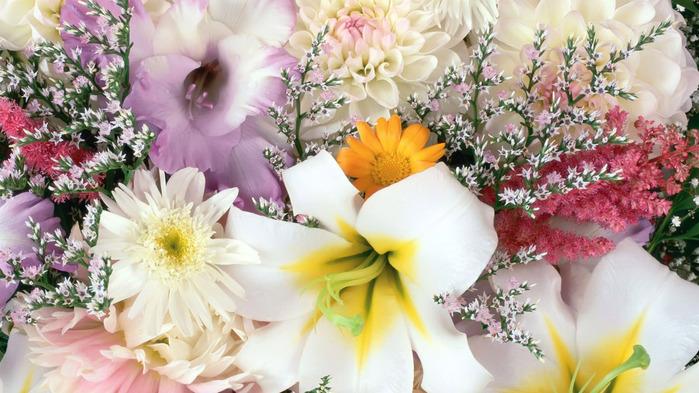 all-flower-wallpaper-1366x768 (700x393, 134Kb)