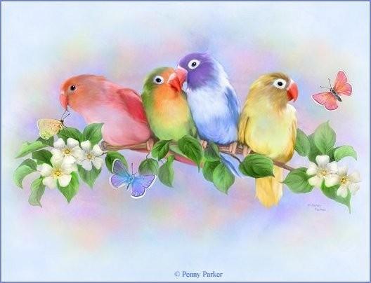 попугаи (528x404, 40Kb)